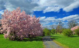Фото бесплатно тропа, яблоня, дерево яблони, цветущее дерево, дорога, поле, деревья, пейзаж