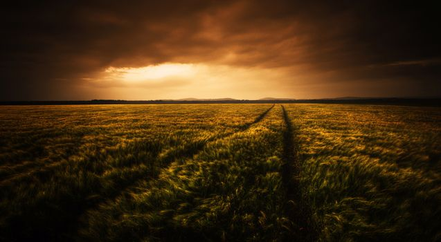 Photo free field, sunset, picturesque landscape