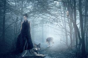 Бесплатные фото лес,туман,деревья,тропинка,девушка,сова,волки