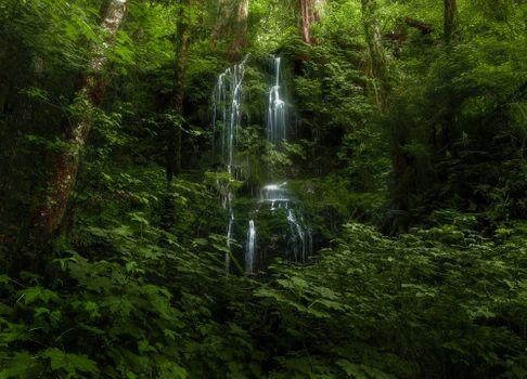 Заставки лесной водопад, лес, деревья