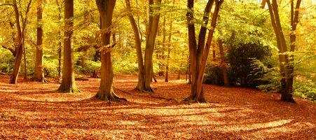 Заставки осень, парк, лес, деревья, осенняя листва, осенние листья, осенние краски, природа, панорама