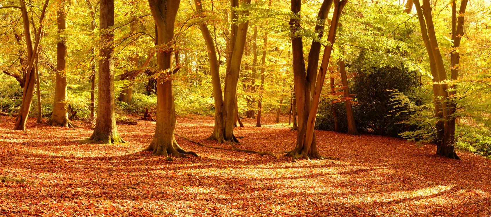 Фото бесплатно панорама, деревья, осень - на рабочий стол