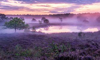 Бесплатные фото Afferden,Netherlands,поле,озеро,лаванда,цветы,туман