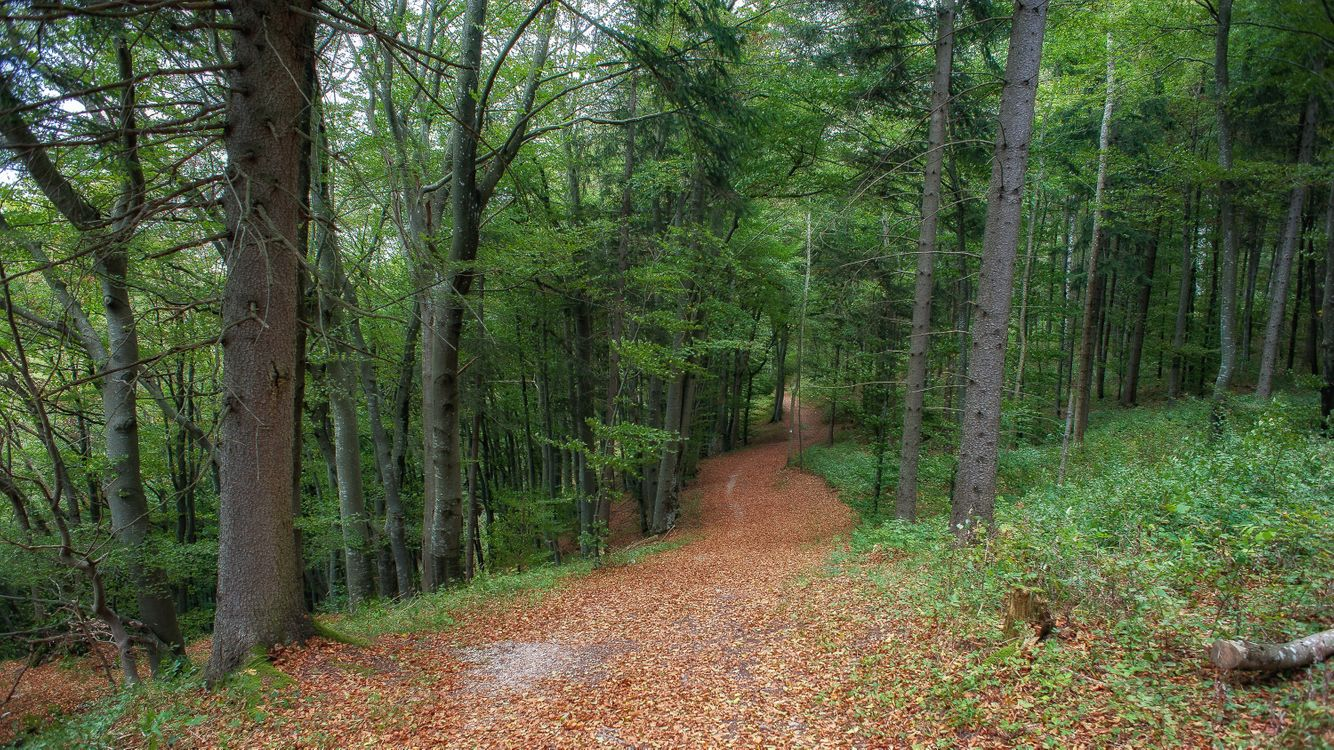 Лесная дорога усыпанная листвой · бесплатное фото