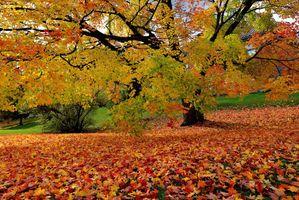 Фото бесплатно Парк, пейзаж, осень цвета