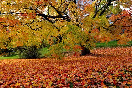 Заставки Парк, пейзаж, осень цвета