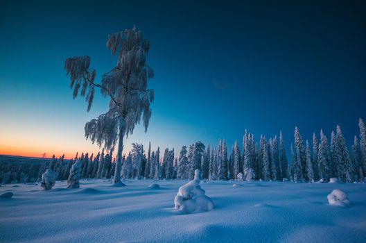 Фото бесплатно Сумерки во время полярной ночи, Финляндия, зима