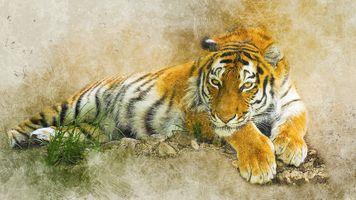 Бесплатные фото тигр,хищник,животное,поза,взгляд,art