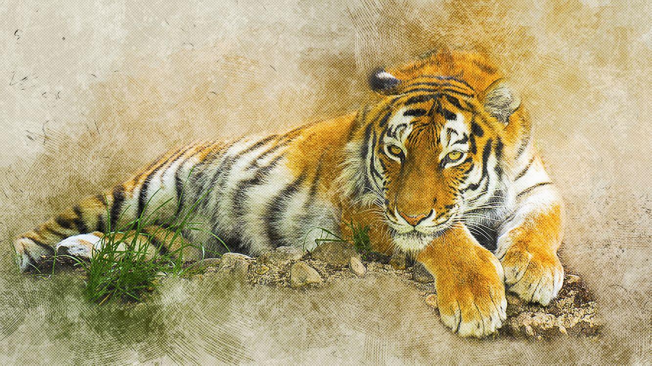 Фото бесплатно тигр, хищник, животное, поза, взгляд, art, рендеринг