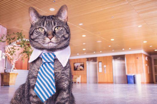 Фото бесплатно кот, галстук, бизнесмен