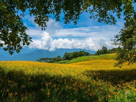 Бесплатные фото поле,цветы,лилии,небо холмы,небо облака,ветки деревьев,природа,пейзаж