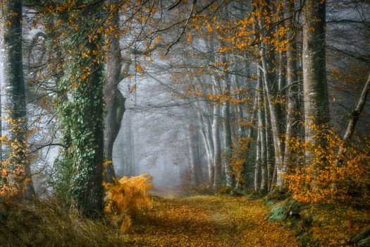 Photo free path, autumn leaves, forest