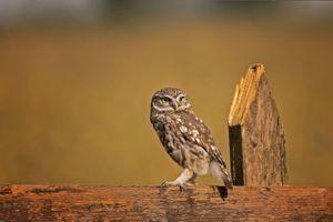Заставки сова, на заборе, удивление