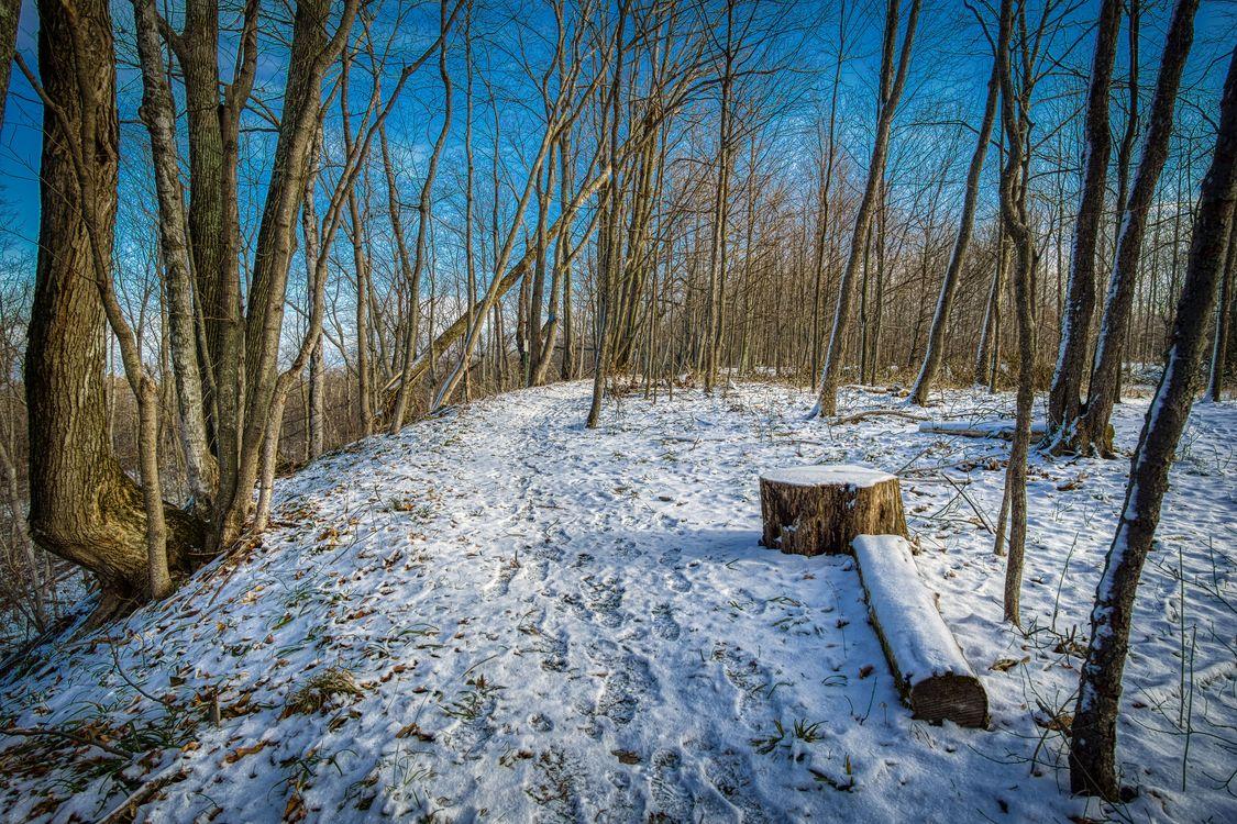 Старый лес и зимняя тропинка · бесплатное фото