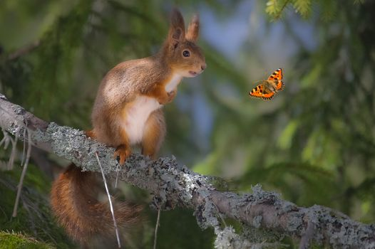 Photo free squirrel, butterfly, branch