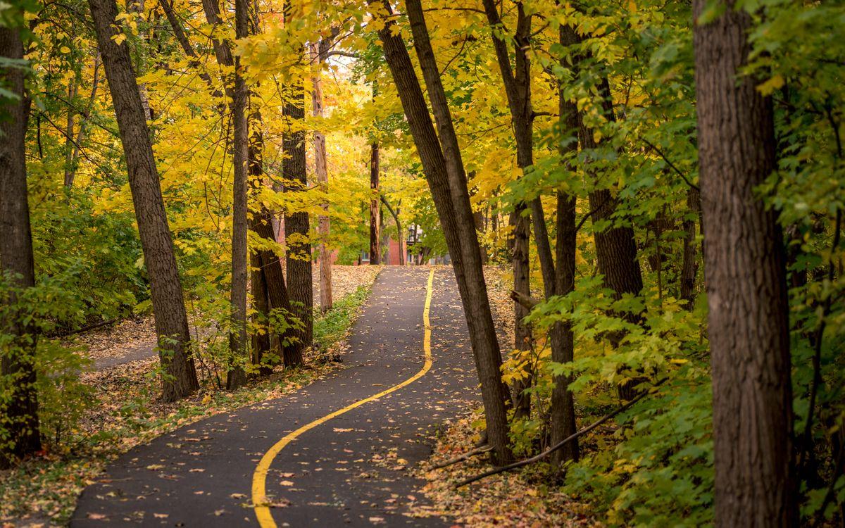 Фото бесплатно лес, велосипед, дороги полоса, падать, природа
