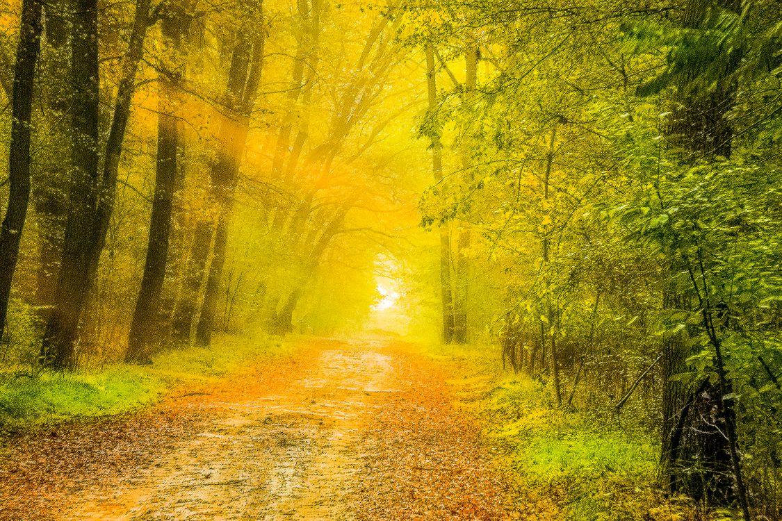 Фото бесплатно солнечный свет, осень, природа - на рабочий стол