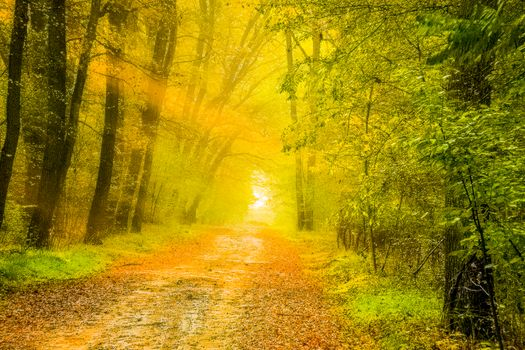 Photo free sunlight, autumn, nature