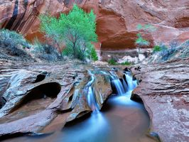 Заставки Swiss Cheese Falls, Coyote Gulch, Grand Staircase National Monument