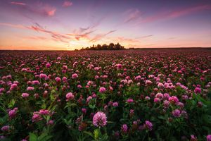 Фото бесплатно клевер, поле, пейзаж