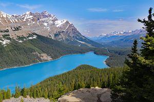 Фото бесплатно природа, деревья, Alberta