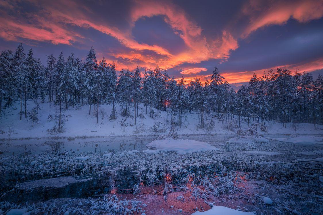 Фото бесплатно Ringerike, Norway, закат, зима, снег, водоём, деревья - на рабочий стол