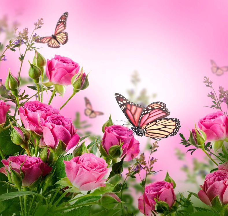 Фото бесплатно розы, бабочка, цветы - на рабочий стол