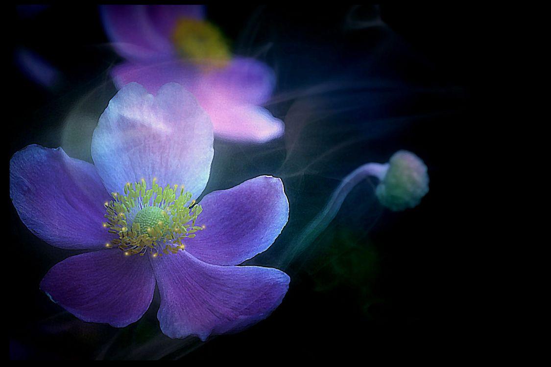 Удивительный цветок · бесплатное фото