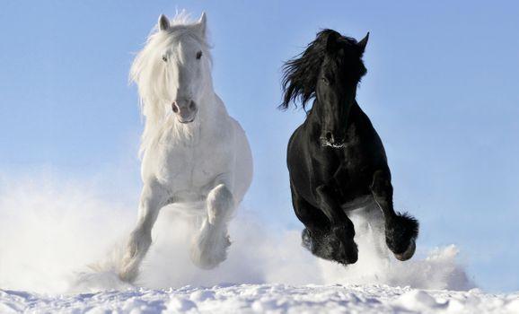 Заставки лошадь, лошади, белый