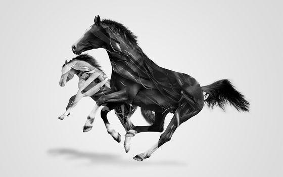 Photo free horse, black horse, white horse