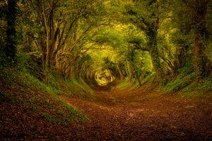 Фото бесплатно тоннель, осень, деревья