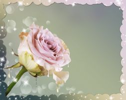 Фото бесплатно цветок, букет, цветение