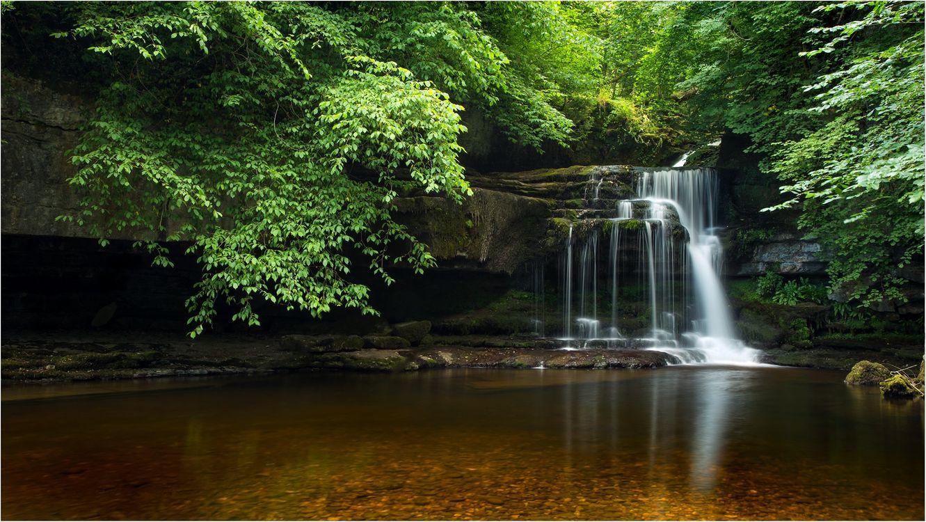 Фото бесплатно Cauldron Falls, West Burton, Yorkshire Dales National Park, пороги, вода, лесной пейзаж, водопад, скалы, деревья, лес, природа, пейзажи