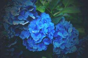 Цветы голубого цвета · бесплатное фото