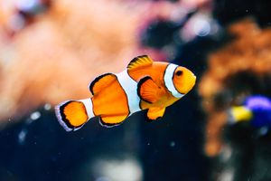 Фото бесплатно ИДК, рыба, красочный