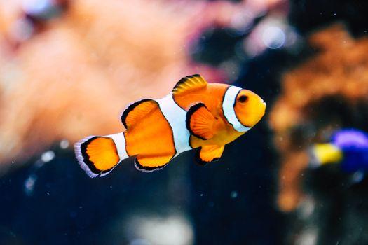 Фото бесплатно ИДК, рыба, красочный, dopez, облака, поле, погрузить, подводный, синий, аквариум, немо, плавать