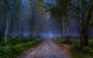 Заставки осень, лес, дорога