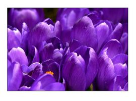 Фото бесплатно природа, цвести, легкий