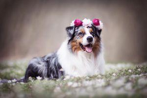 Собака с венком на голове · бесплатное фото