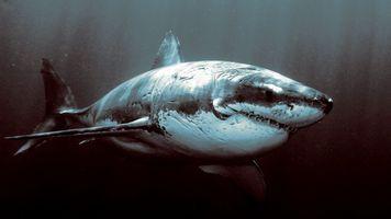 Фото бесплатно акула, большая белая, океан, глубина, пасть