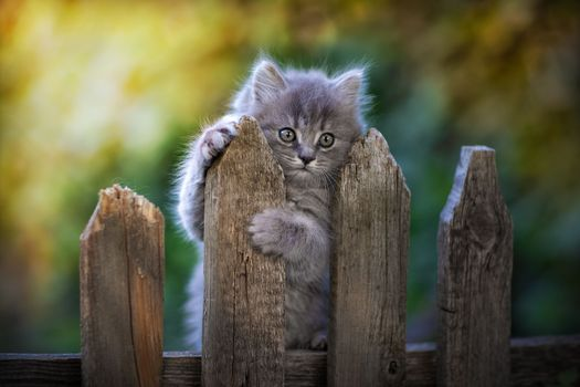 Photo free animals, fence, face