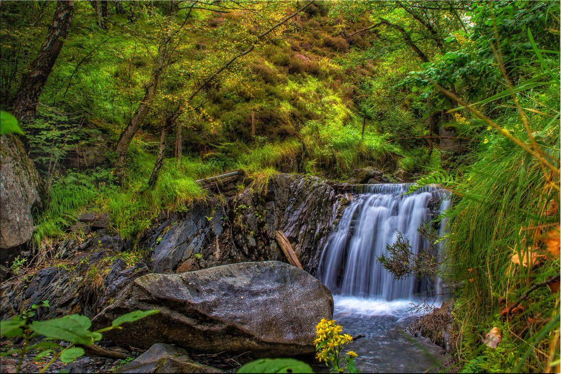 Фото бесплатно лес, водопад, деревья, камень, скалы, течение, природа, пейзаж, пейзажи