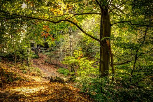 Заставки осень,лес,парк,деревья,природа,пейзаж