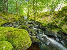 Фото бесплатно лес, река, мох