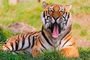 Фото бесплатно фон, хищник, животное