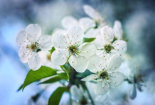 Photo free flower, flowering branch, blossom