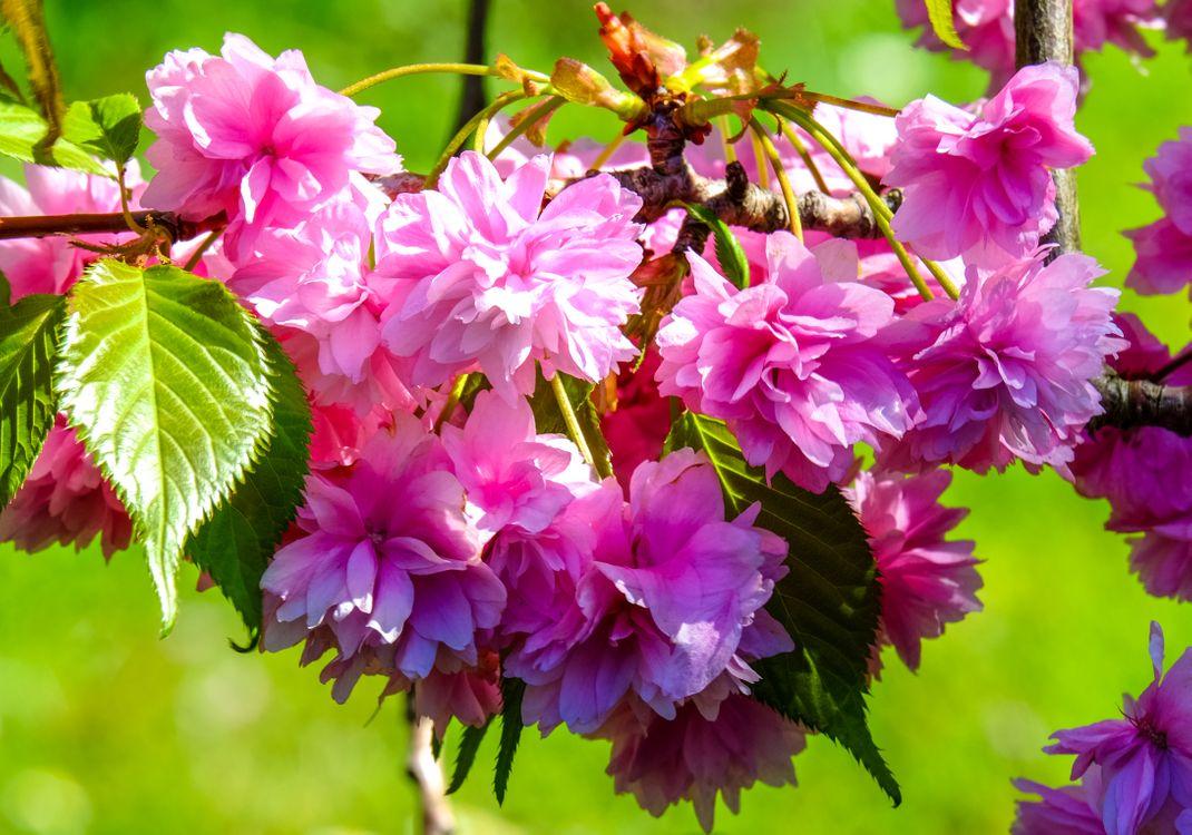 Фото бесплатно цветущие ветви, флора, весна - на рабочий стол