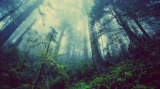 Фото бесплатно туман, лес, джунгли