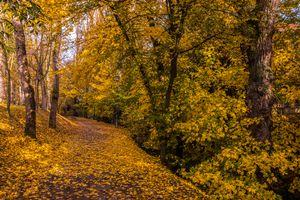 Бесплатные фото осень,парк,дорога,деревья,лавочка,осенние листья,осенние краски