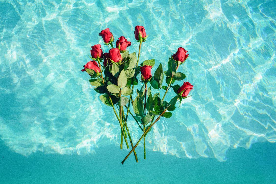 Картинка с морем и розами